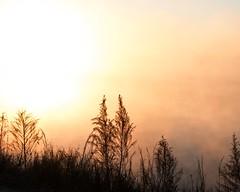 Sun Burn (DASEye) Tags: davidadamson daseye nikon fog foggy lake water sunrise dawn