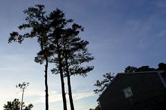 End of the Day (Rich Renomeron) Tags: olympusmzuiko1442mmf3556ez olympusomdem10 bethanybeach dusk trees