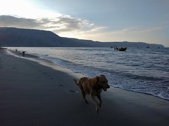 Shore Patrol II (Ctuna8162) Tags: dog dogs running beach playa ocean chile perro mejillones boat wakeboarder waterskiing shore chase chasing sunset play fun