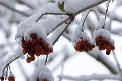 ckuchem-8085 (christine_kuchem) Tags: asthaufen baumstamm eis forst frost haufen holz staatsforst stmme tiere unterschlupf wald wasser wildnis winter winterschlaf winterwald gefroren gewsser kalt naturnah reif schnee wild ste