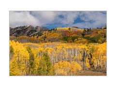 Fall colours in Colorado (David N Moorhouse) Tags: colorado usa