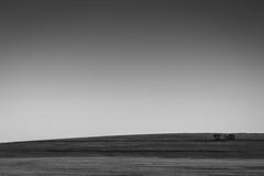 Canola Field (haoguoju) Tags: australia nsw newsouthwales sydney spring landscape outdoor a7m2 a7 sony sonya7markii sonyilce7m2 fe f14 forrest samyang85mmf14asifumc samyang 85mm light shadow cloudless bw blackwhite blackwhitelandscape canola canolafield tree cowra yass canberra
