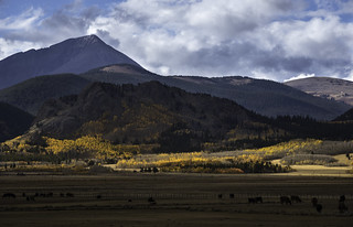 Incorrigibly Bucolic Colorado