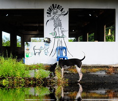 ,, Legs, Aliens, Buddha, Roof ,, (Jon in Thailand) Tags: aliens dog k9 legs water reflection jungle buddha nikon d300 nikkor 175528 roof thedogpalace hands bluechair plasticchair blue green yellow red gold decaybuilding mrpeabodysherman littledoglaughedstories