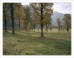 untitled (macfred64) Tags: film analog mediumformat 120 645 6x45 fujiga645wi fujinon45mmf4 kodakportra160 austria tyrol hinterrisseng ahornboden groserahornboden maple autumncolors trees mountains alps