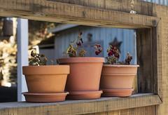 Pots on the fence (Pedro M. Gmez) Tags: downieville pots downievilleca goldrushtowns californiagoldrush