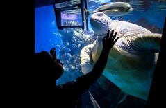 New England Aquarium (TomBerrigan) Tags: new england aquarium turtle sea seaturtle tank water ocean boston mass massachusetts fish
