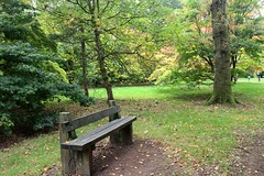 Bench in woodland (Pat's_photos) Tags: westonbirt tree bench hbm
