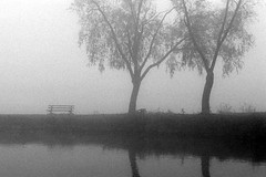 ah00102fogbnchtrs.tif (Jim Corwin's PhotoStream) Tags: atmosphere climate atmospheric weather meterorology nature beautyinnature atmosphericscience naturalscience naturalworld outdoors dramatic nobody photography horizontal travel landscape scenic peaceful serene fog foggy sunrise trees shoreline alone lonliness tranquil tranquilscene mystery mist misty waterdroplets moody isolation ethereal quiet rural dreamlike green spring lakewashington water lake parkbench