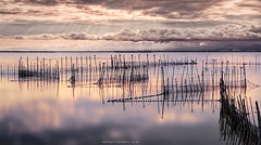 An afternoon in the Albufera (Antoni Figueras) Tags: albufera valencia spain afternoon birds rods clouds longexposure sonya77ii cz1680 reflections puchol goladepuchol