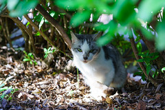 Feral cat () Tags:        cat kitty feralcat outdoor pretty animal japan