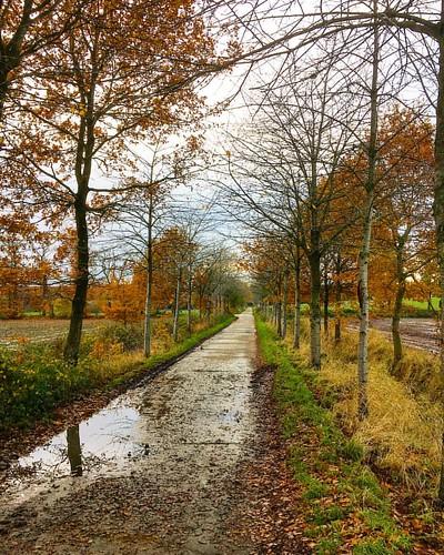 #wijnendale #wood #belgium #foliage