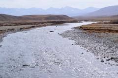 MAQ_0418 (MolviDSLR) Tags: deosair national park skardu gilgit baltistan northern areas pakistan brown bear wild life scenery landscape