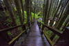 Alisan Forest Scenic Taiwan (REVIT PHOTO'S) Tags: superior taiwan sacredtree alisan alisanforestrailway tourismtaiwan visittaiwan landscape forest nature green