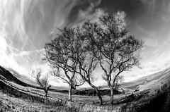 Piethorne Rerservoir (TrevKerr) Tags: nikon d7000 nikon105mm fisheye landscape lancashire piethornereservoir rochdale monochrome blackandwhite bw
