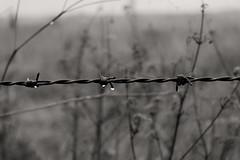 Rain Drops (Crisp-13) Tags: water drop rain barbed barb wire fence