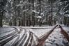 The Snowy Forest, 2016.11.20 (Aaron Glenn Campbell) Tags: mannygordon recreationsite pinchotstateforest thornhursttownship lackawannacounty nepa pennsylvania textures snowfall snow tiretracks wintry trees outdoors nature 3xp ±2ev macphun aurorahdr2017 google nikcollection sony a6000 ilce6000 mirrorless rokinon 12mmf2ncs wideangle primelens manualfocus emount
