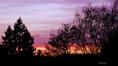 Christmas Sunset (kiareimages1) Tags: sunsets tramonti coucherdesoleil colors images trees sky cielo ciel paysages landscapes paesaggi mostbeautifulpictures