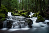 Above Panther Creek Falls (M3tr1c) Tags: panther creek falls waterfall river wet flow rush rock moss rocks logs trees waterfalls columbia gorge gifford pinchot national forest