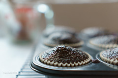 Baked Chocolate Cupcakes (Ana Penelope) Tags: cupcake chocolate