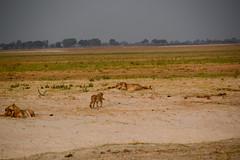 DSC_0742_edited-1 (Tom J Haas) Tags: elements africanfisheagle alice baboon bird buffalo camp chobenationalpark crocodile eagle elephant game drive giraffe hippo impala jackal kudo landscape leopard lion owl sable sunrise sunset tom vulchers warthog zebra