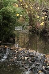 IMG_8917 (Geoff_B) Tags: badockswood bristol walkinthewoods autumn november unprocessed unedited