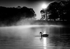 Atmospheric morning. (smudgy271174) Tags: richmond park blackandwhite bw silhouette atmosphere morning sunrise mist pond water simply superb