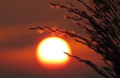IMG_0034x (gzammarchi) Tags: italia paesaggio natura pianura campagna ravenna villanovadiravenna tramonto sole canna riflesso