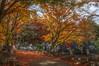 Autumm in Matsushima, Japan (HDR) (Kasimir) Tags: japan matsushima autumm herbst otoño hdr luminancehdr