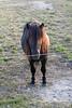 How is my hair? (Martijn A) Tags: paard horse pferd cheval caballo hest häst hair haar model posing portrait portret boederij farm herfst autumn poseren beauty schoonheid canon d550 dslr 35mm lens animals dieren marenkessel noordbrabant nederland the netherlands dutch equus wwwgevoeligeplatennl