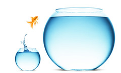 Invista apenas capital que pode arriscar - 03-11-2016 INVESTIMENTOS ORGANIZATIONAL STRUCTURE (agarbfinancecorporate) Tags: animal aquarium background beautiful bowl bubble challenge concept escape fish fishbowl flying free freedom friendship glass gold goldfish happiness immigration isolated jump jumper leap liquid macro motion move new orange pet splash splashing swim tank tropical underwater vacation water wave white