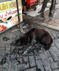 Dog enjoying a pile of ice - Bangkok (ashabot) Tags: bangkok thailand streetscenes street seasia streetlife travel dog cooldog animal animals coolanimals