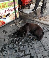 Dog enjoying a pile of ice - Bangkok (ashabot) Tags: bangkok thailand streetscenes street seasia streetlife travel dog cooldog animal animals coolanimals