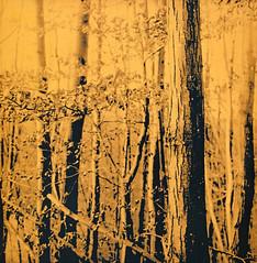 SE5Lith+omega (Claudio Taras) Tags: light lith lithprint se5 claudio contrasto controluce taras trier natura bokeh bw biancoenero tlr rolleiflex35f rodinal rollfilm 6x6 omega film fomapan fomafomatonemg131 moersch fineprint 20x20 medioformato mediumformat 100 ro9 150
