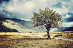 El árbol (Japo García) Tags: árbol camino paisaje llanura montañas naturaleza nubes italia abruzzo sombra viaje descansar