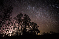 Varying Density (JeffMoreau) Tags: density south carolina stars milky way long exposure trees swamp sony a7ii zeiss astrophotography 1635