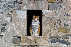 El gato de Urriales (carnuzo) Tags: leica m9 aposummicron 75mm