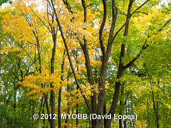 Duke Farms-203253 (myobb (David Lopes)) Tags: fall nature newjersey nj duke olympus leafs tress hillsborough e510 dukefarm