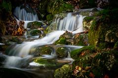 Fall. (Paulius Bruzdeilynas) Tags: autumn mountain fall water leaves norway rock stone creek flow norge stream norwegian