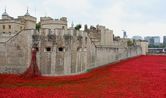 Blood Swept Lands. (konstantynowicz) Tags: london poppy poppies toweroflondon poppys bloodsweptlandsandseasofred toweroflondonpoppies