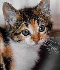 26/365 - Kitty
