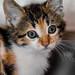 26365 - Kitty