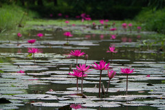P1170324.jpg (Julien Sebire) Tags: delta vietnam mekong 2014