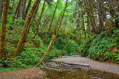 A Creek Runs Through (Kirt Edblom) Tags: california statepark park red vacation fern green creek humboldt nikon scenic logs overcast canyon hike wife redwood redwoods ferns humboldtcounty hdr highway101 ferncanyon 2014 prairiecreek prairiecreekredwoodsstatepark gaylene easyhdr homecreek nikond7100