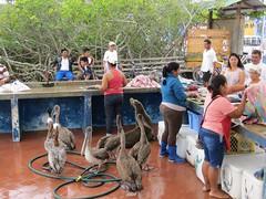 Galápagos - Santa Cruz-15