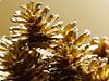 "Golden pine (karakutaia) Tags: sun tree love nature japan paper temple japanese tokyo heart superb card e simply sogno rockpaper afotando ""flickraward"" flickrglobal elementsorganizer allbeautifulshotsandmanymoreilovenature flowerstampblackandwhite transeguzkilorestreetarturbanagreatshotthisisexcellentcontestmovementricohgxr""serendipitygroupbluenatureicapture flickraward5""j tra realtabstract"
