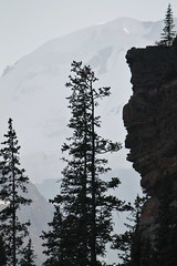 Banff NP ~ Lake Louise (karma (Karen)) Tags: trees canada mountains silhouettes pines alberta glaciers lakelouise canadianrockies victoriaglacier banffnp canadanationalparks