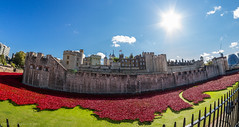 Blood Swept Lands and Seas of Red (markhortonphotography) Tags: red london canon blood wwi bluesky fisheye 7d poppies 8mm firstworldwar toweroflondon armisticeday tompiper 8mmfisheye rokinon historicroyalpalaces paulcummins markhortonphotography bloodsweptlandsandseasofred