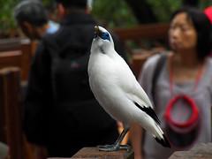 nEO_IMG_100_1501 (samuel_wkip) Tags: bird hongkong kodak central hongkongpark hongkongparkaviary kodakz990 z990 hongkongpark香港公園 hongkongparkaviary香港公園觀鳥園