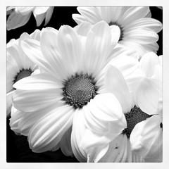 black & white (3OPAHA) Tags: canon 2000 explore 3000 1000